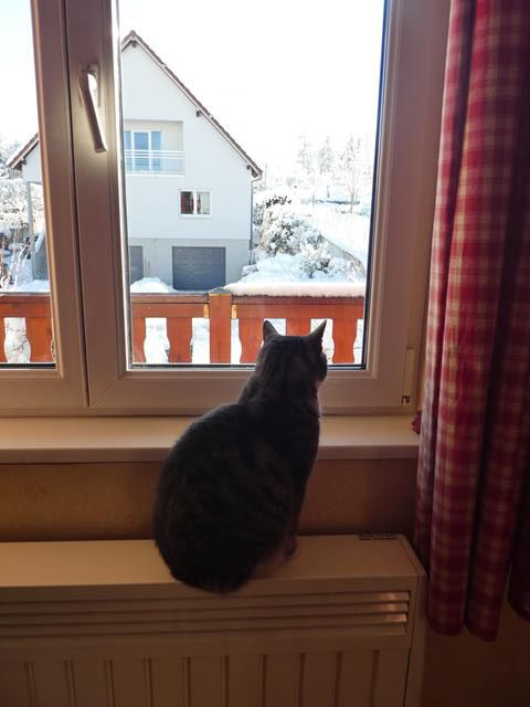 Histoire de chat....