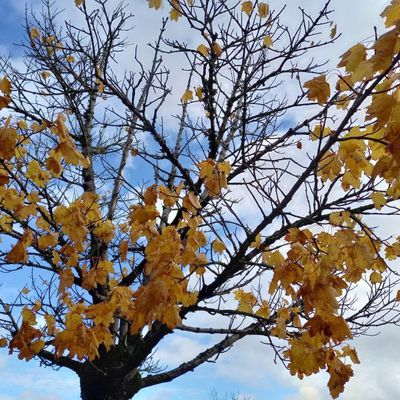 Un automne à Saint-Brieuc