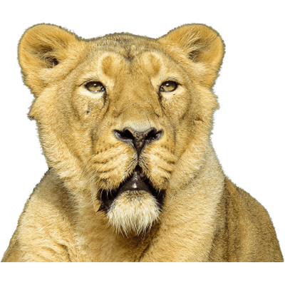 Animaux : (Tigres-Lions,Rats,chats)