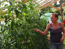 La maraîchère bio, Delphine Barbaux, prépare ses paniers de légumes