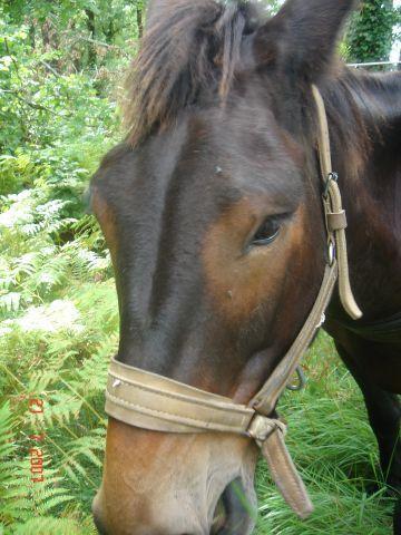 Un mulet tête de mule,peut-être,mais patrimoine vivant!