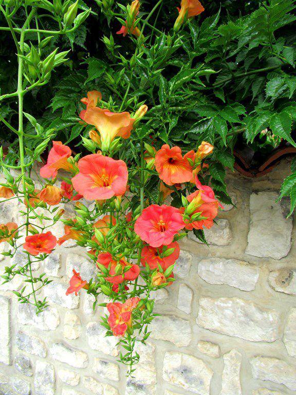 Chaniers (17) -le vieux bourg- Le Poitou-Charentes comme si vous y étiez