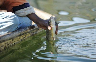 Maroc: L'aquaculture, nouvelle orientation de la coopération entre Dakar et Rabat