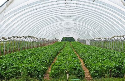 POLYHOUSE CULTIVATION- THE SMART APPROACH TO FARMING