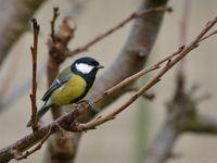 Nourrir les oiseaux oui, mais surtout ne pas les intoxiquer!