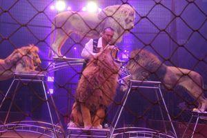 Le conseil municipal de Kehl ne veut plus de cirques avec animaux…