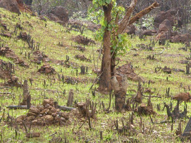 Saison des pluies au Fouta Djalon