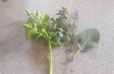 La chlorophyle serait utile contre le corona et bien d'autres :