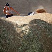 Grâce aux sanctions la Russie devient leader mondial des exportations de céréales