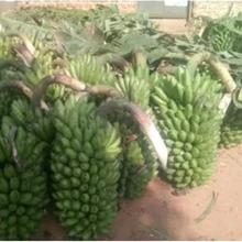 Pour une agriculture résiliente il faut supprimer les barrières commerciales