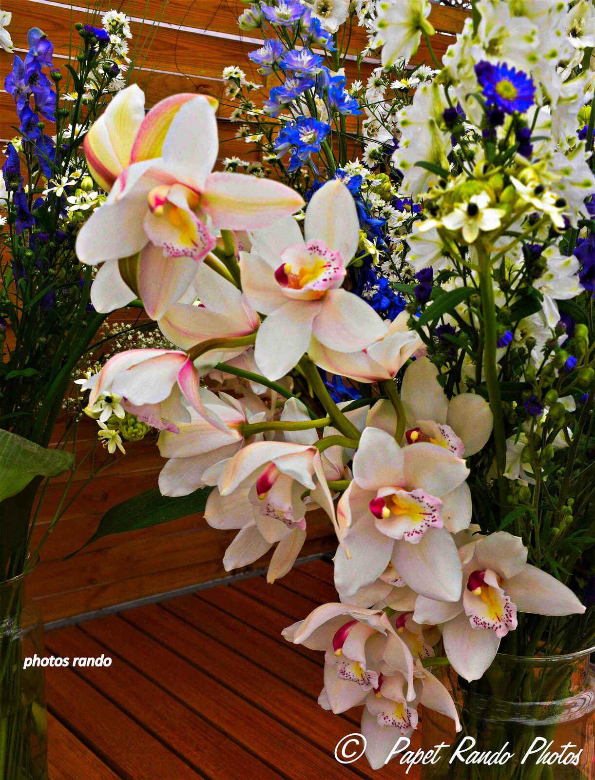ORCHIDEES MANIA photos un peu partout, Tenerife (dans tout les parcs), aux Floralies, aussi a la maison, les fleurs preferées de mon Epouse