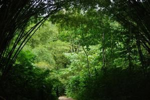 photos de cariacou, grenade et trinidad