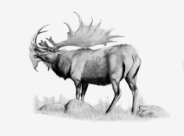 Megaloceros is an extinct genus of deer whose members lived throughout Eurasia from the late Pliocene to the Late Pleistocene and were important herbivores during the Ice Ages