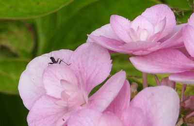 Les insectes en Bérry ;-)