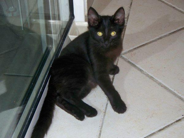 HARLEY - Chaton - 3 mois - adopté