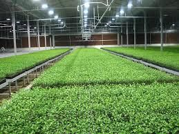 Greenhouses that can help us sustain through global warming