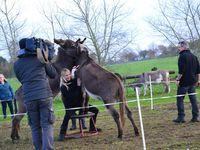 Après l'quipe de  Milllions d'amis en 2008 c'est l'équipe des animaux de la 8 qui nous ont fait l'honneur de venir filmer notre spectacle !!! c'était le 16 novembre. Un moment inoubliable rempli de bonheur et d'émotion. A découvrir le 28 janvier 2018 sur la C8