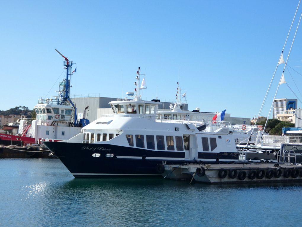 PEARL OF RIVIERA , a quai à la Seyne sur Mer  le 17 mars 2021