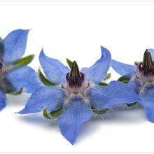 À propos de la sécurité sanitaire des fleurs comestibles... ou des fleurs du mal