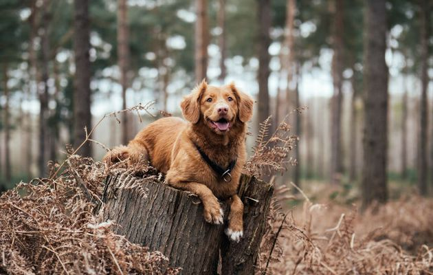 Get Your Dog to Behave: Dog Training Collars Buying Guide
