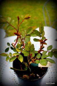 Fête des plantes rares de la Feuillerie-3