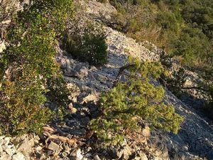 le chemin du DFCI - vue au loin sur le château d'Allègre - abords du sentier en descendant
