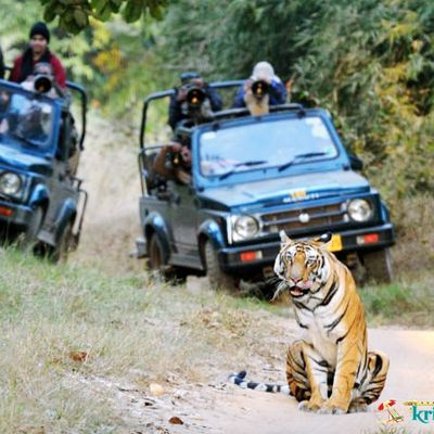 Wildlife Safari in Uttarakhand