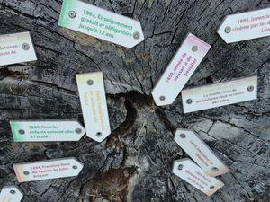 Histoire et vie d'un arbre sur une tranche de peuplier