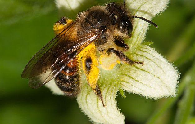 Unterschrift für die Biene! 24. September auf dem Holzmarkt