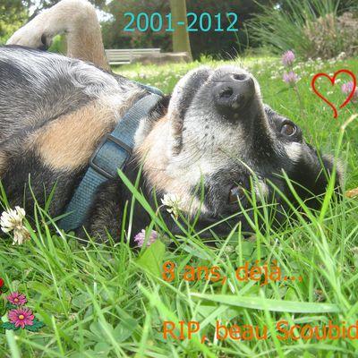 8 ans, déjà, pauvre Scoubidoo...!