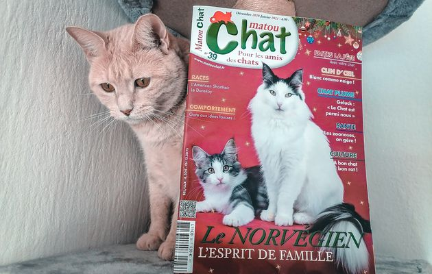 Le magazine Matou Chat