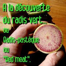 "Les radis verts ""red meat"" (Raphanus sativus) ? Excellents !"