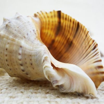Few Facts about Sea Shells!