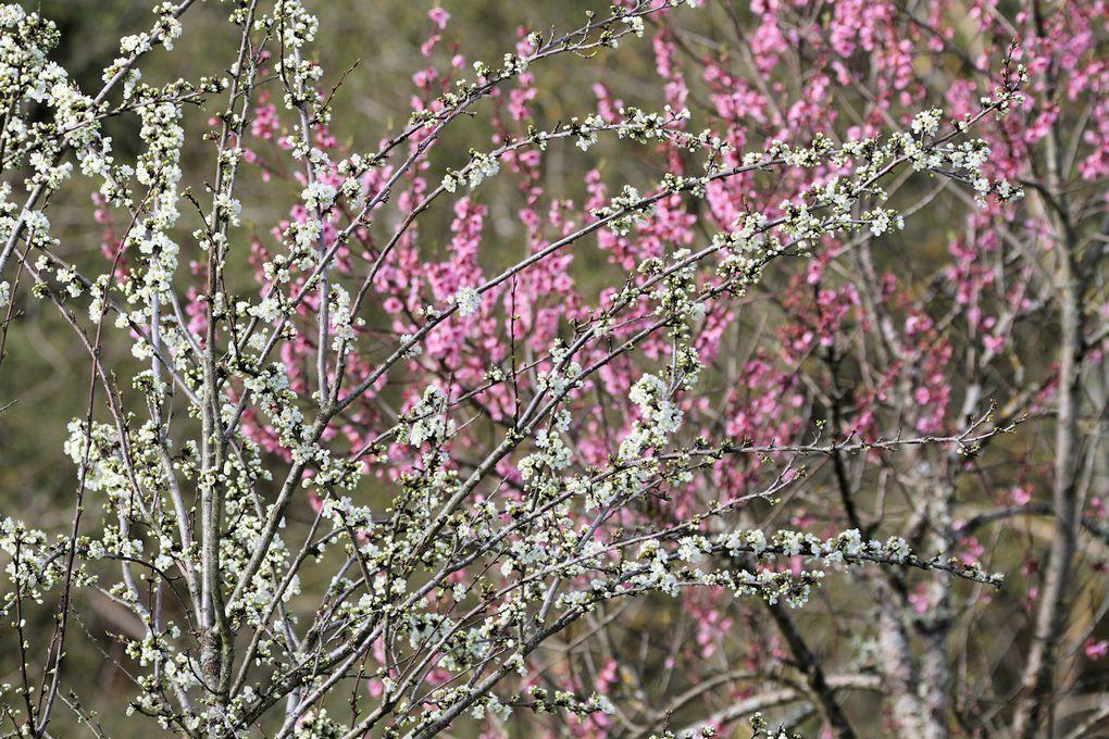 Impressions : un début de printemps
