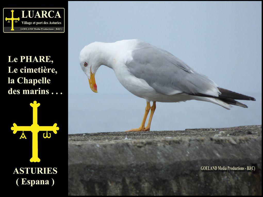 Pour AFFICHER PLEIN ECRAN, CLIQUER sur les PHOTOS - goelandmedia.prod@gmail.com ( C )