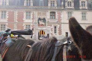 le cheval de Roi qui amble