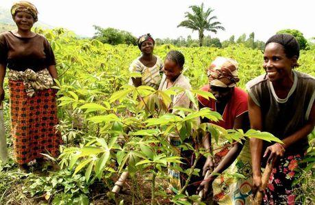 Femmes rurales.  La finance inclusive pour pallier aux difficultés d'accès au crédit