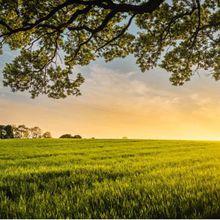 Les agriculteurs aux « frontières de la prospérité » choisissent les semences GM