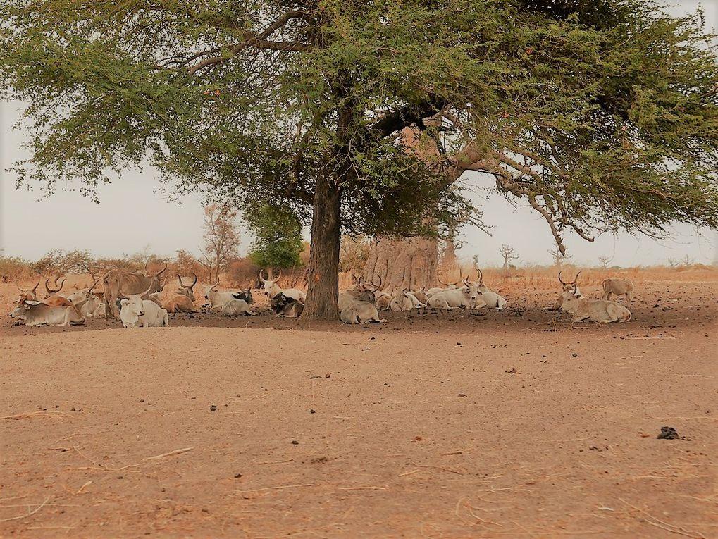 petit retour du Sénégal