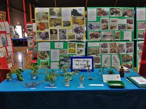 Expo photos complète (faune et flore marines/ flore dunaire) ; Laisse de mer ; Quizz sur les plantes dunaires  (récolte d'échantillons à Lomener) ; Jeux pour éduquer à la Mer ...
