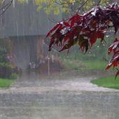 L'odeur de la pluie réduit le stress et 7 autres avantages de marcher sous la pluie - Santé Nutrition