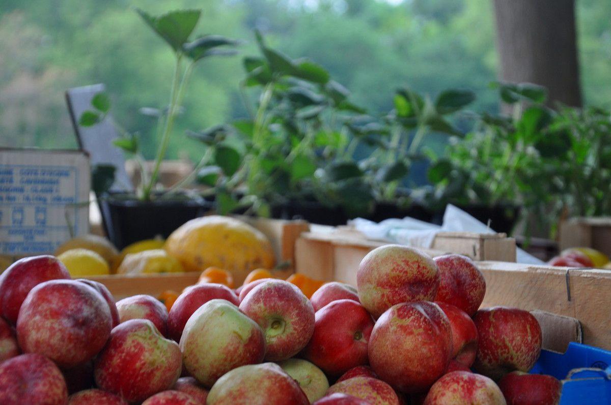 Et des pommes pour accompagner la fraise.