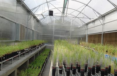 Choose Best Commercial Greenhouse Supplier