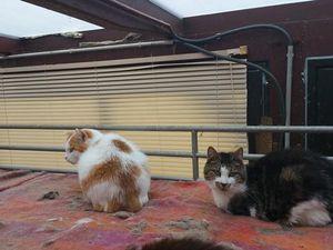 Sauvetage du coeur dans les yvelines 4 chiens et 39 chats