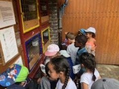 Ferme pédagogique groupe 4/5 ans - Centre Jean Zay