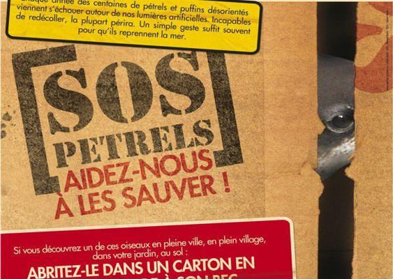 Réunion des bénévoles « SOS pétrels »