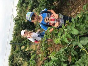 Anatole France primaire Cueillette de Bugnicourt du 20 Juillet