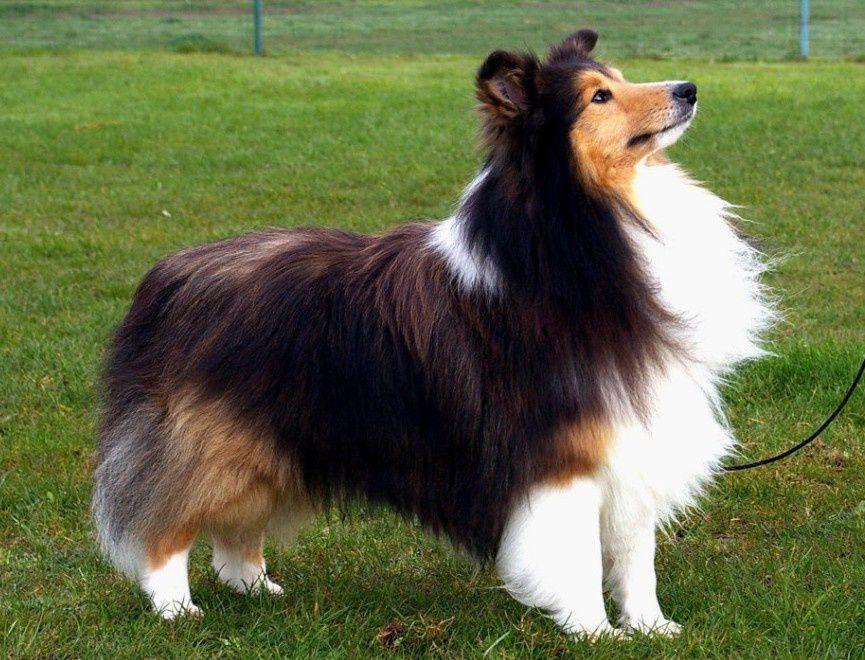 Ce qu'il y a de meilleur dans l'homme, c'est le chien...