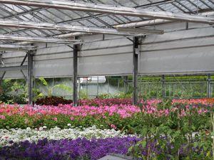 Les splendides serres et productions du centre horticole de la Ville de Lancy