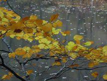Inspir d'automne